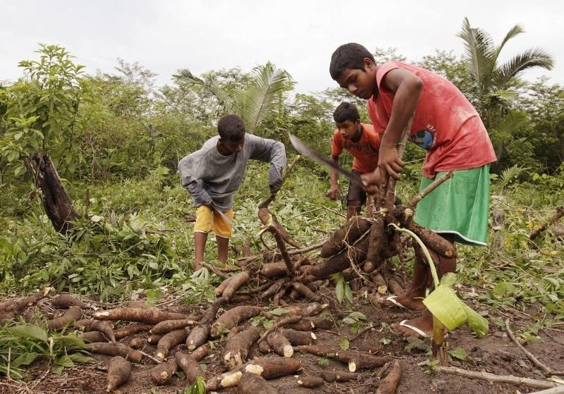 Trabalho infantil na agricultura cresce 15,4% em um ano
