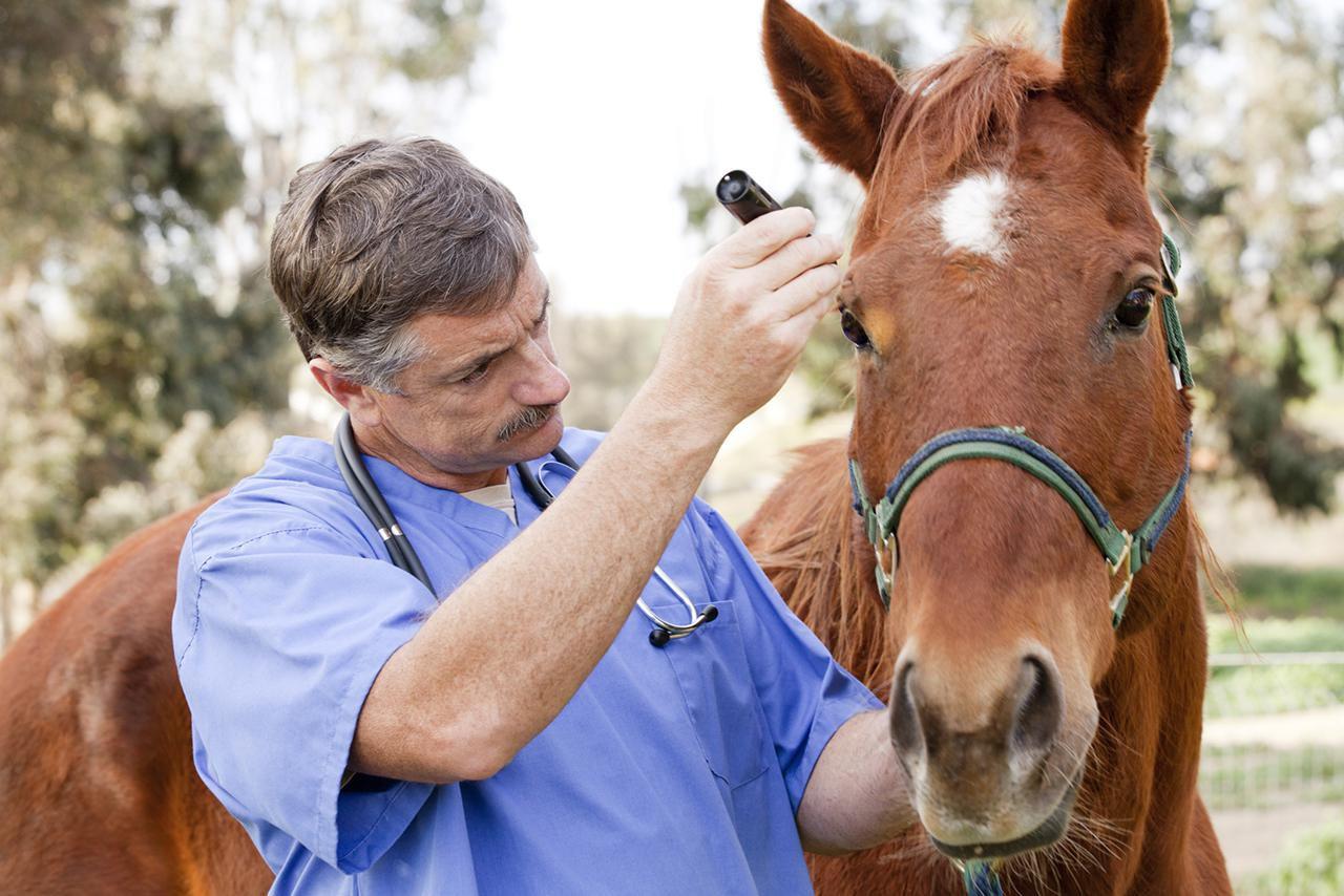 9 de setembro: Dia do Veterinário