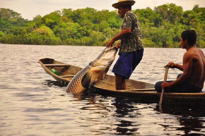 Medida quer evitar fraude de carteiras de pescadores no Amazonas e no Brasil