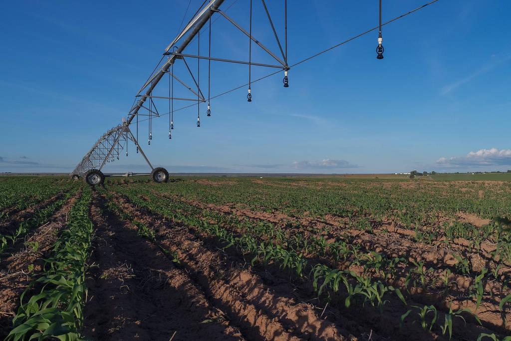 Produtores apontam biodiesel como solução